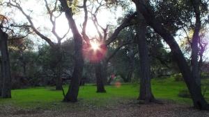 Descanso_Gardens (82)
